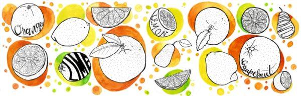 Aquarell- und Fineliner-Illustration. Orangen, Limetten, Kumquats und Zitronen.