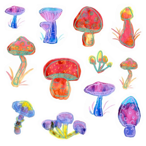 Colorful watercolor illustration of some psychedlic looking mushrooms.